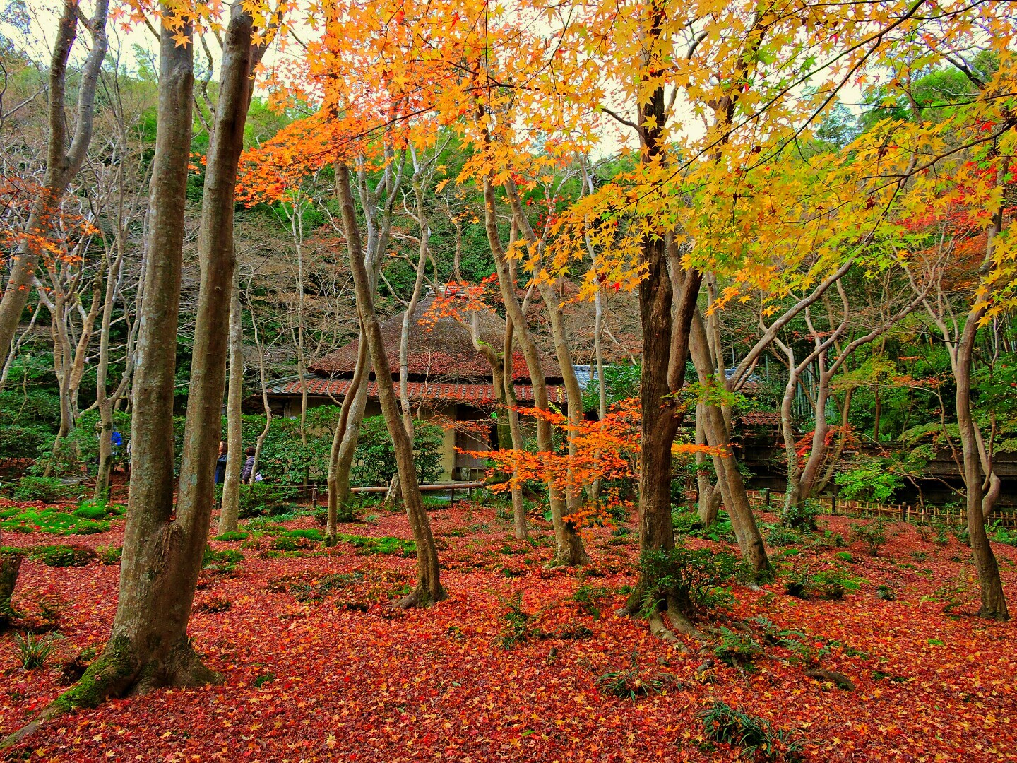 10 Best Autumn Leaves Spots in Kyoto 2019