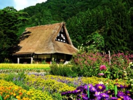 Central Japan: 12 Best Tours and Activities 2019