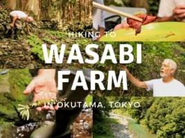 Hiking to Wasabi Farm in Tokyo Hidden Oasis: Tama