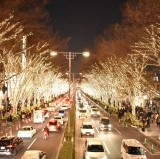 Omotesando Illumination