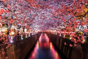 15 Best Places to See Cherry Blossoms in Tokyo
