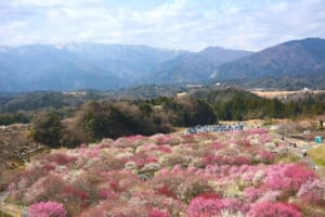 Top 10 Things to Do in Japan in March