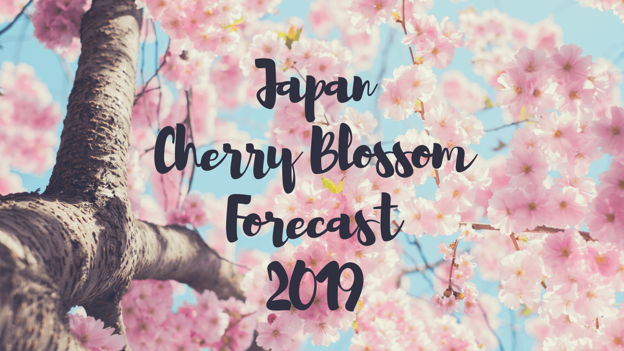 Cherry Blossom Forecast and Map in Japan