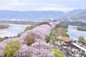 Yodogawa Riverside Park : Stunning Sakura Tunnel in Kyoto