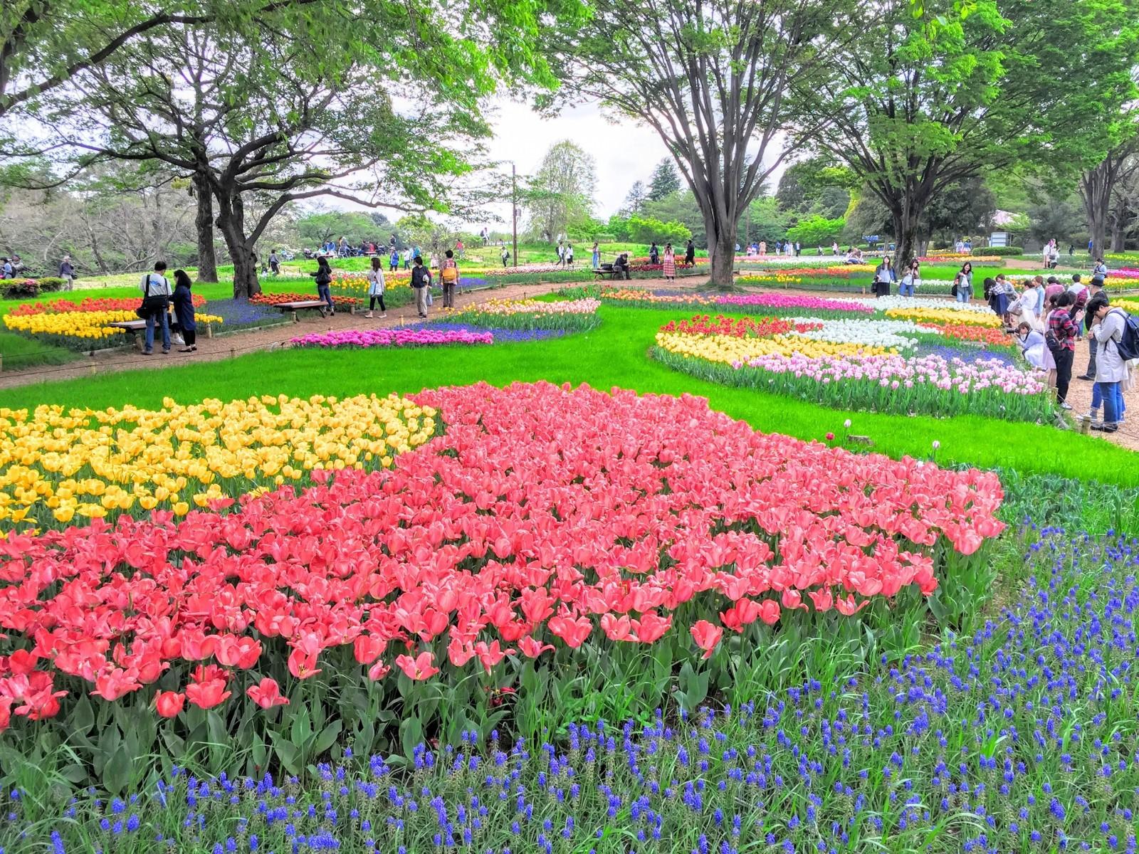 Showa Memorial Park Best Flower Park In Tokyo Japan Web Magazine