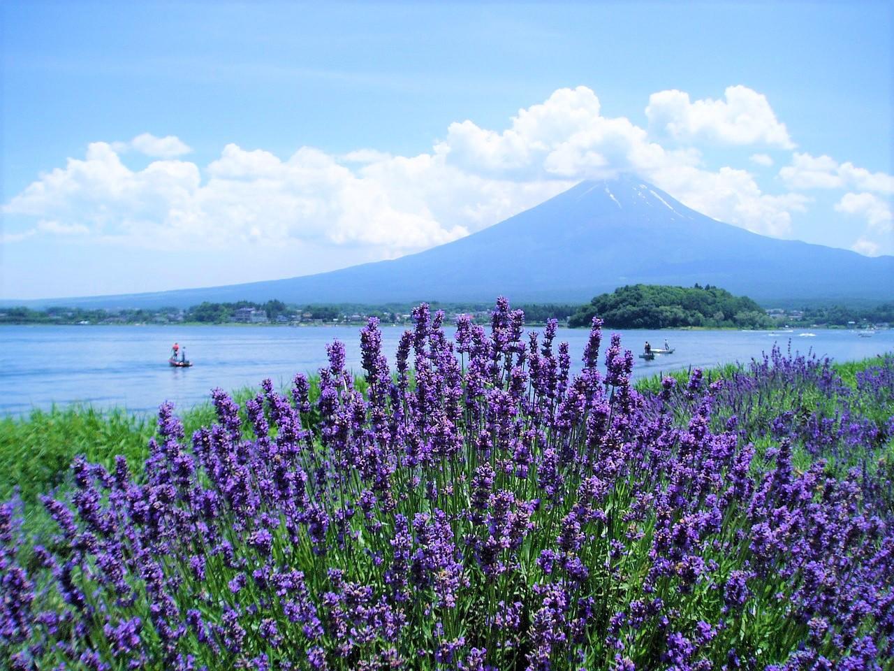 Fuji Kawaguchiko Herb Festival 2020