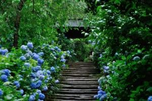3 Best Temples in Kamakura for Hydrangea Viewing