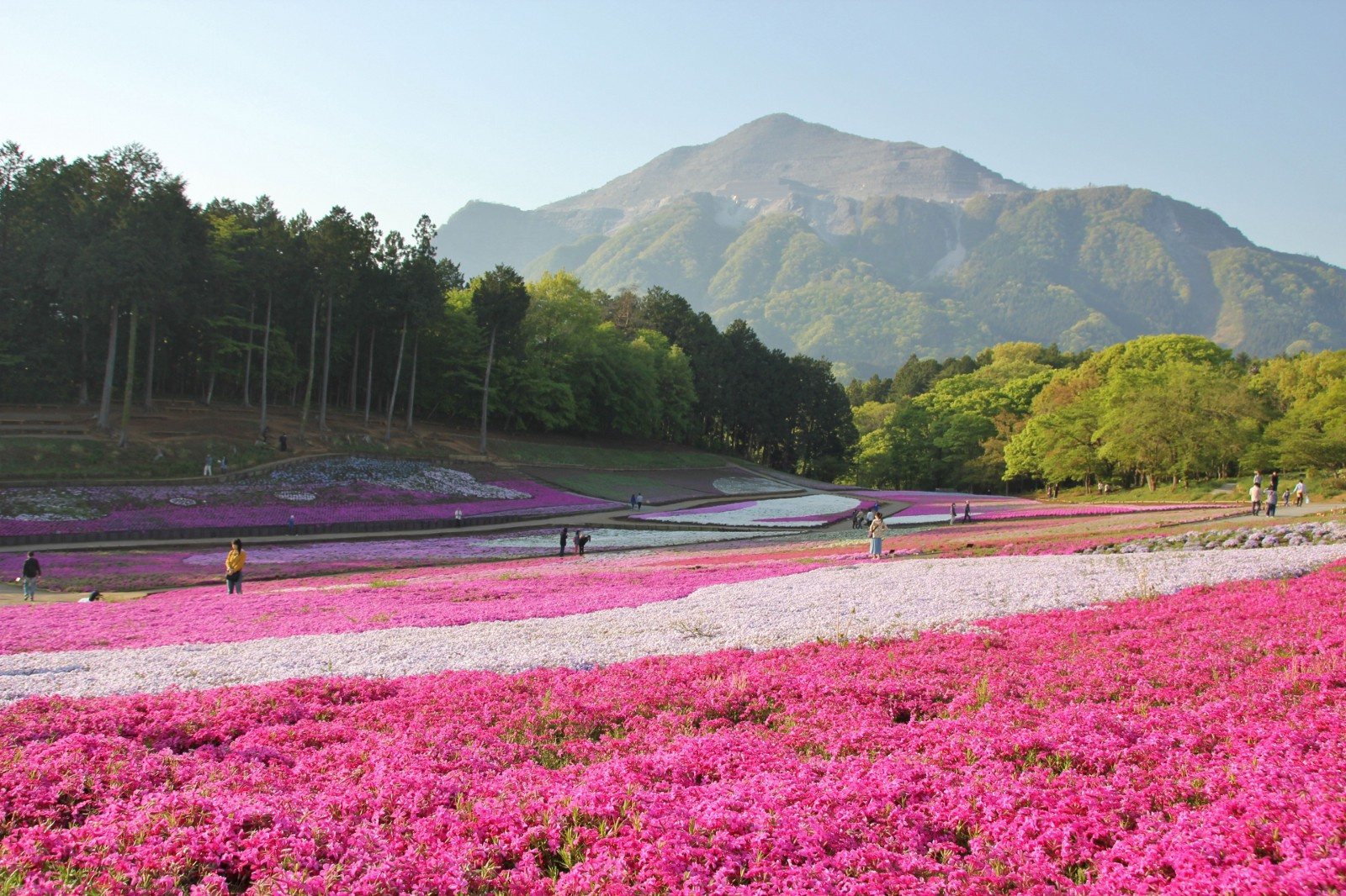 Saitama: 10 Best Things to Do in 2019