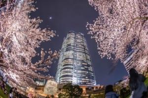 Mori Garden Roppongi Cherry Blossoms