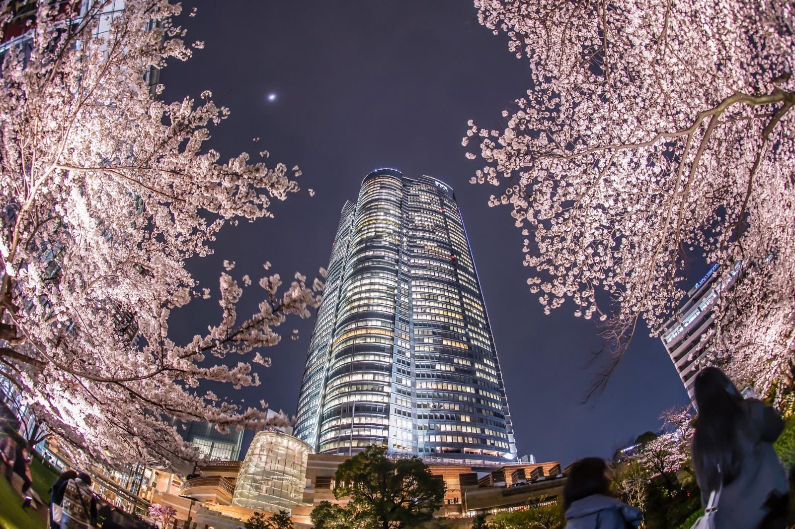 Mori Garden Roppongi Cherry Blossoms 2020