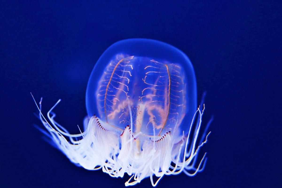 5 Best Aquariums in Tokyo2020