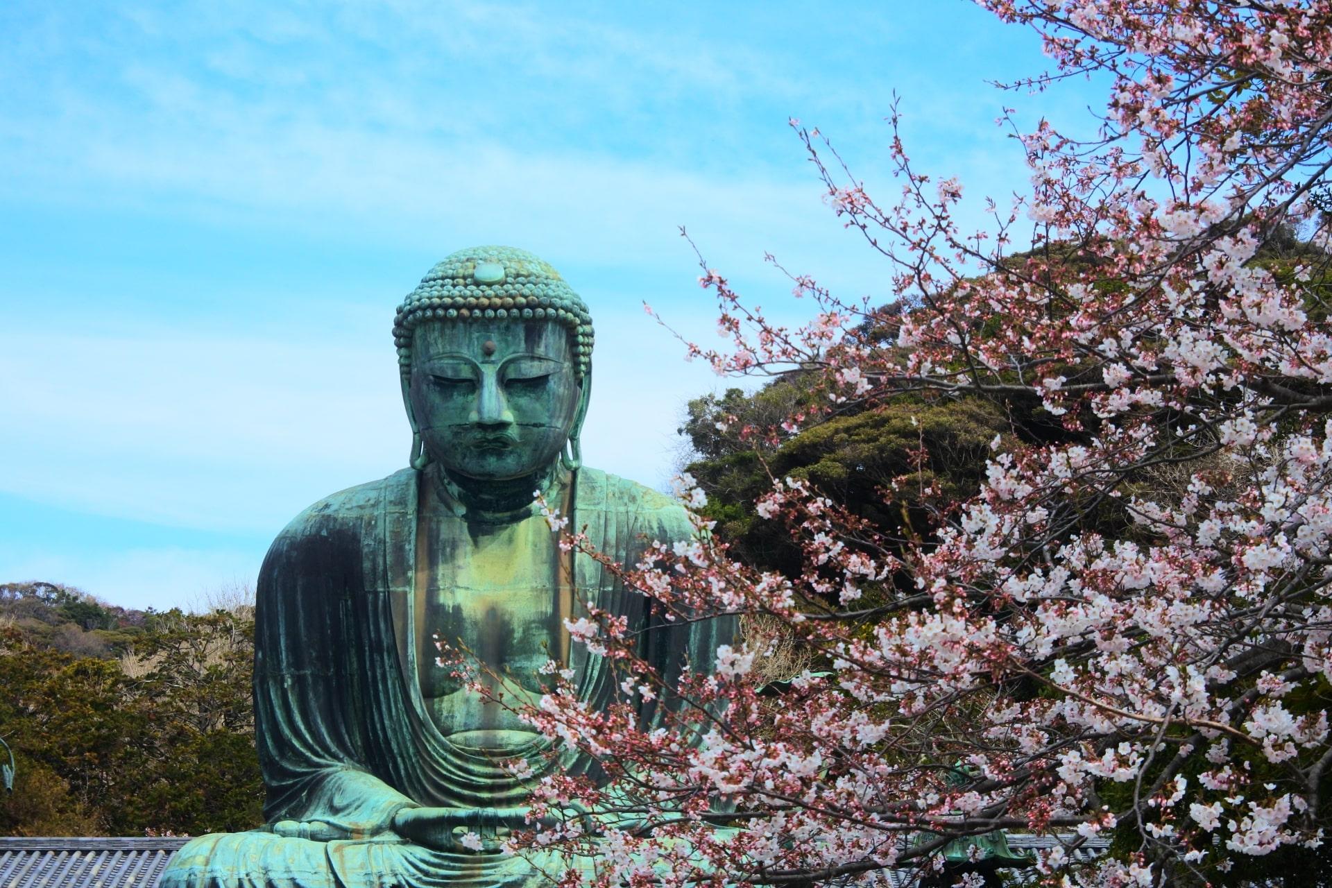 Kamakura DaibutsuBuddha with Cherry Blossoms