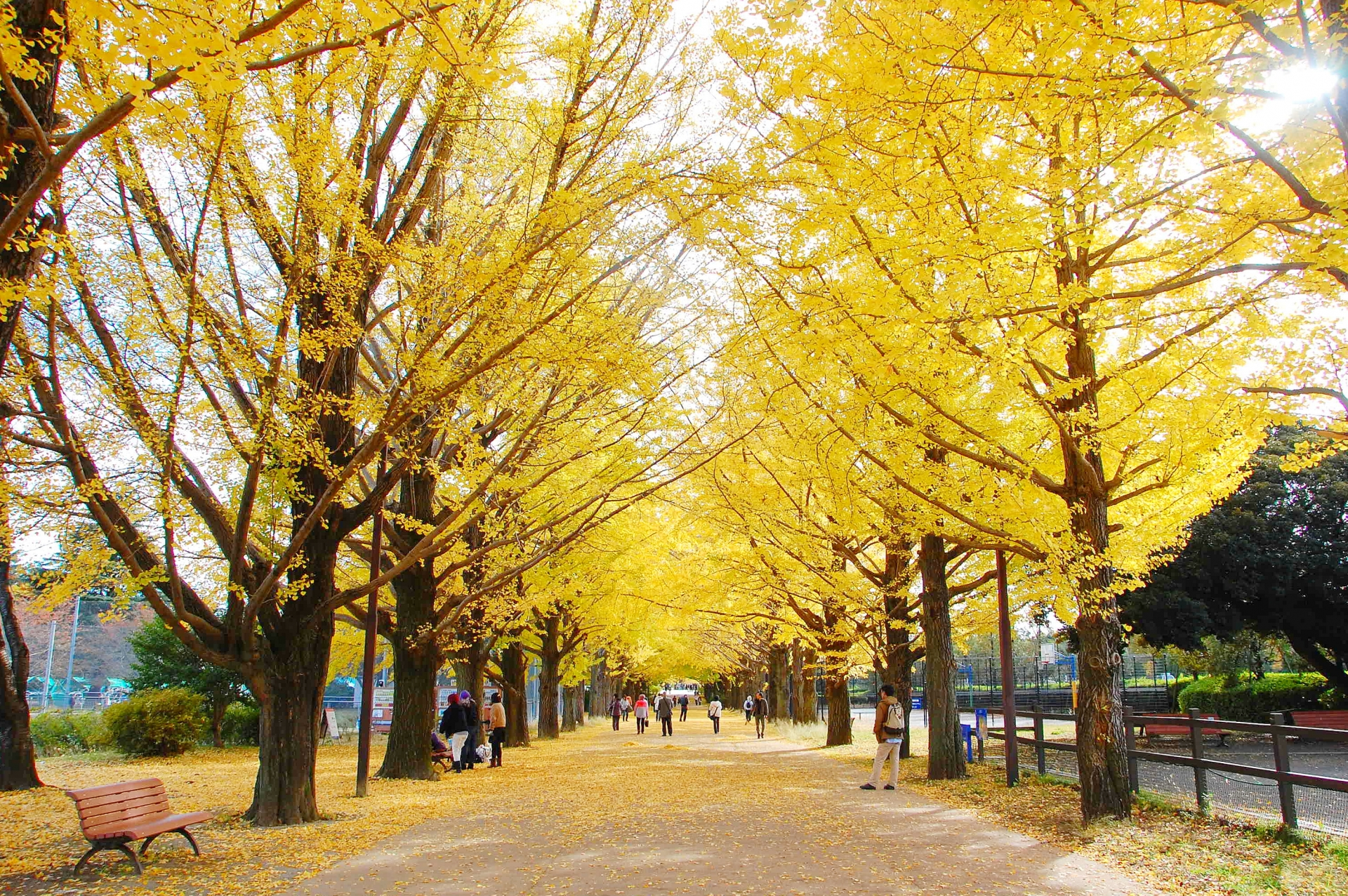 Tokyo in November : Best Things to Do 2020
