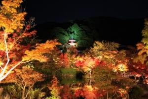 Eikando Zenrinji Temple: Best Autumn Leaves Illumination inKyoto