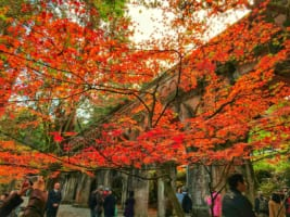 Nanzenji Temple: Photo-Worthy Temple Complex inKyoto