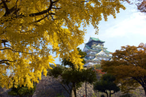 5 Best Autumn Leaves Spots in Osaka
