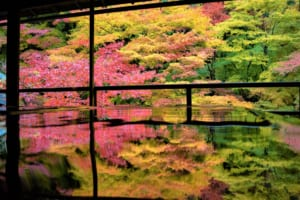 Rurikoin Temple Kyoto: Picturesque Temple with MapleLeaves