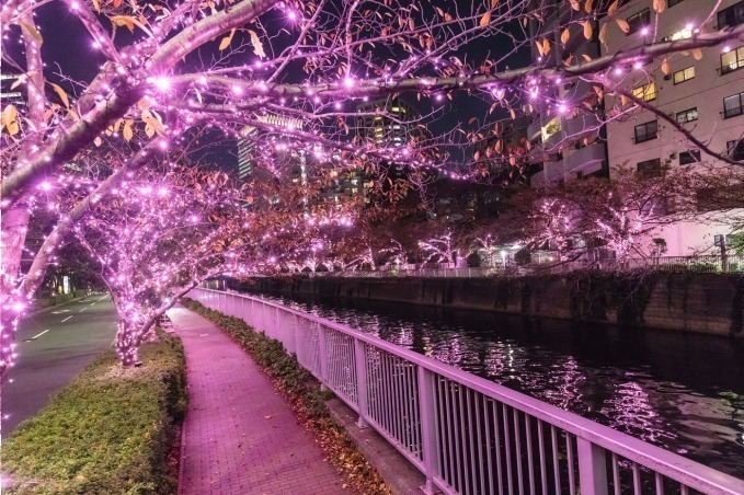 Meguro River Minna no Illumination 2019