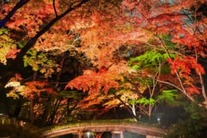 5 Best Places to See Autumn Leaves in Tokyo at Night