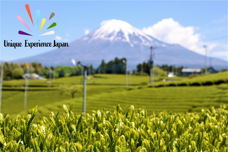 Best Green Teas in Japan