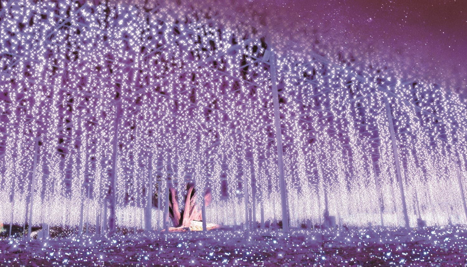 Ashikaga Flower Park Illumination 2019–2020