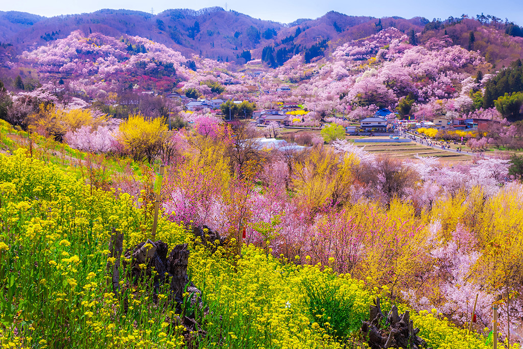 Hanamiyama Park: Flower-Filled Shangri-La in Fukushima