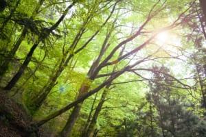 10 Best Nature Spots in Tokyo
