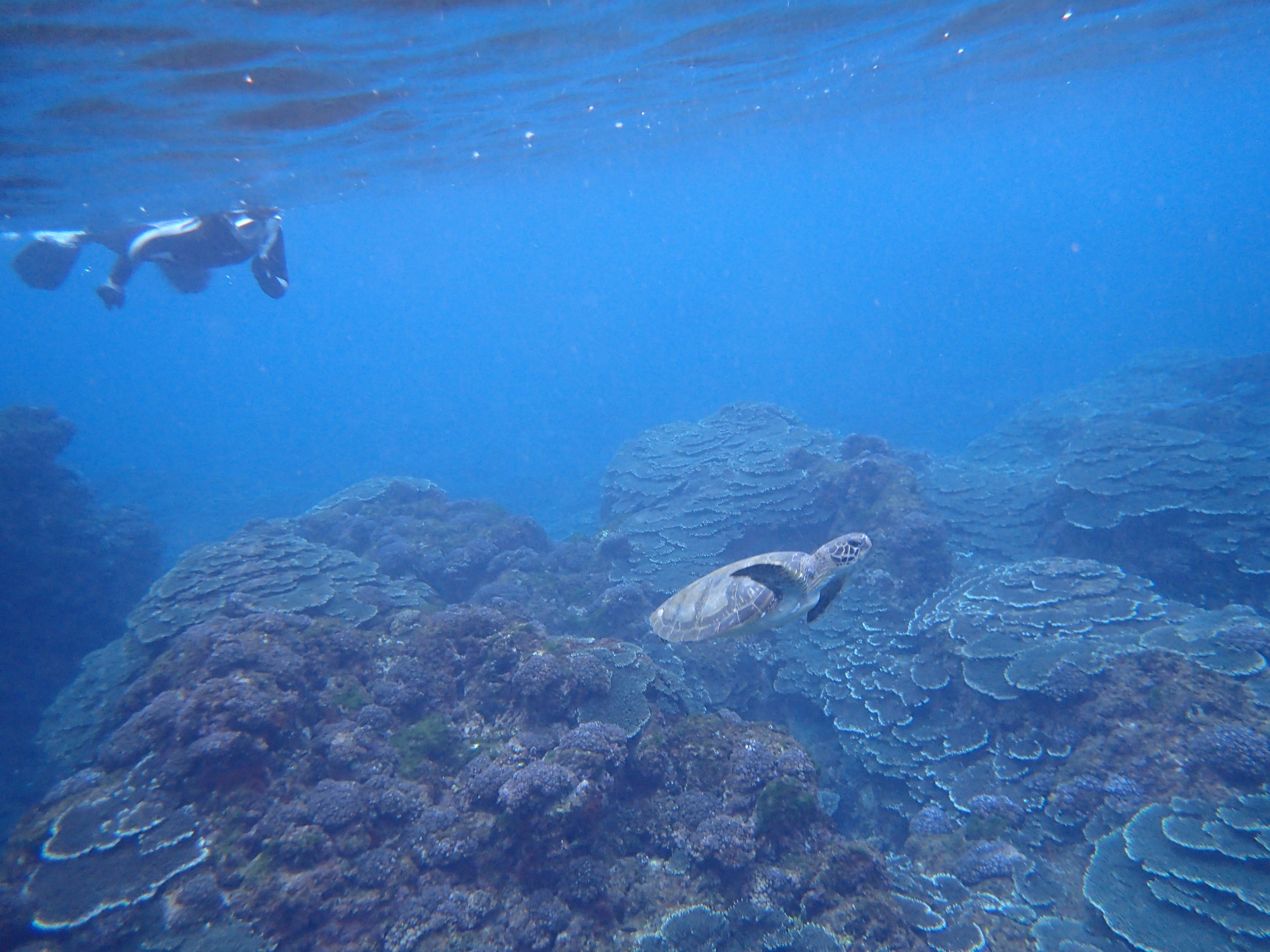 Hachijojima scuba diving
