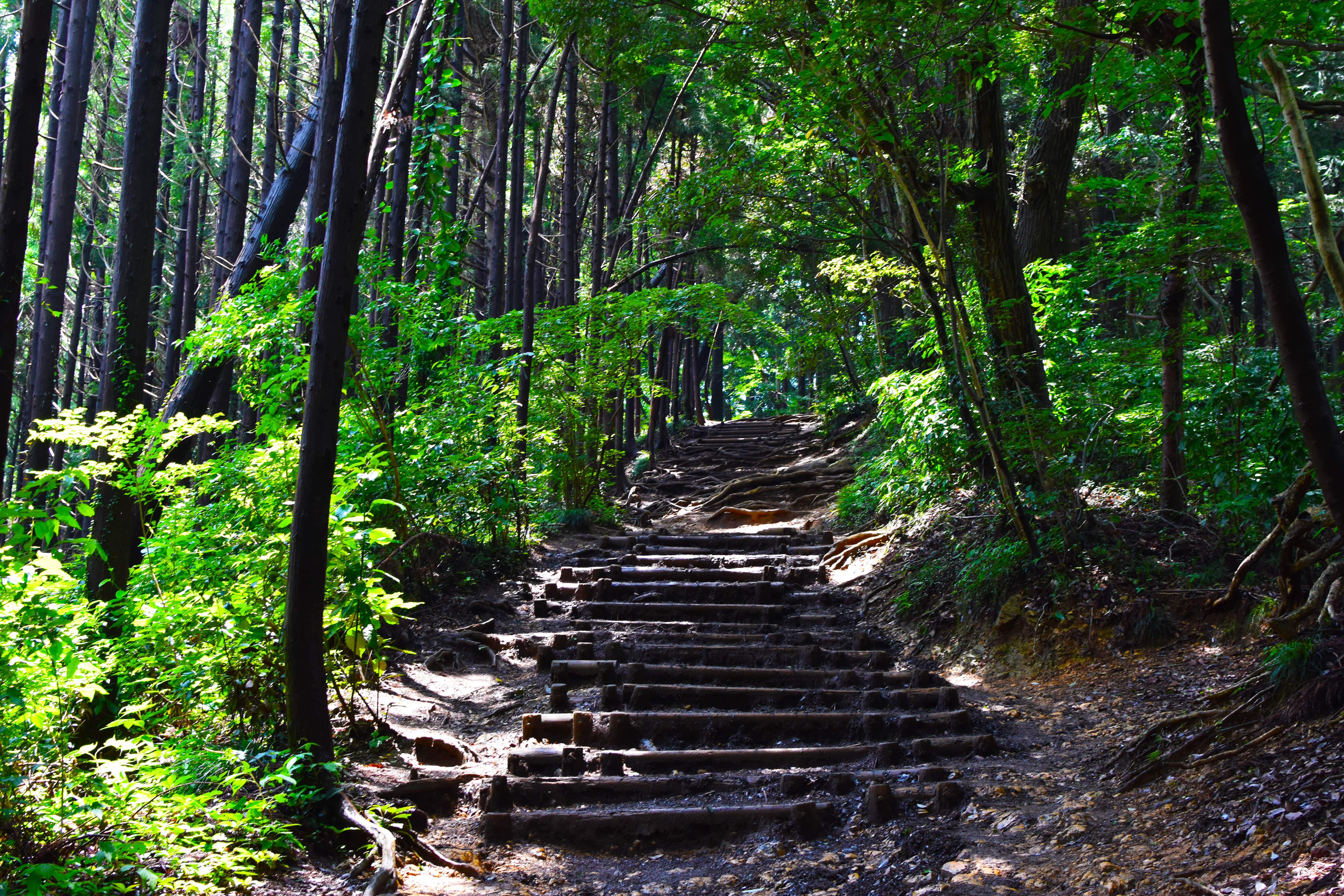 Mt Takao forrest