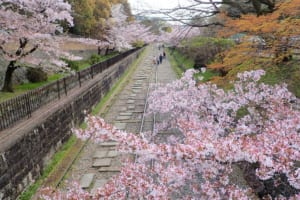 Keage Incline Kyoto: Cherry Blossoms at Old Railroad