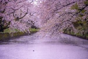 Best Cherry Blossom Spots in Tohoku