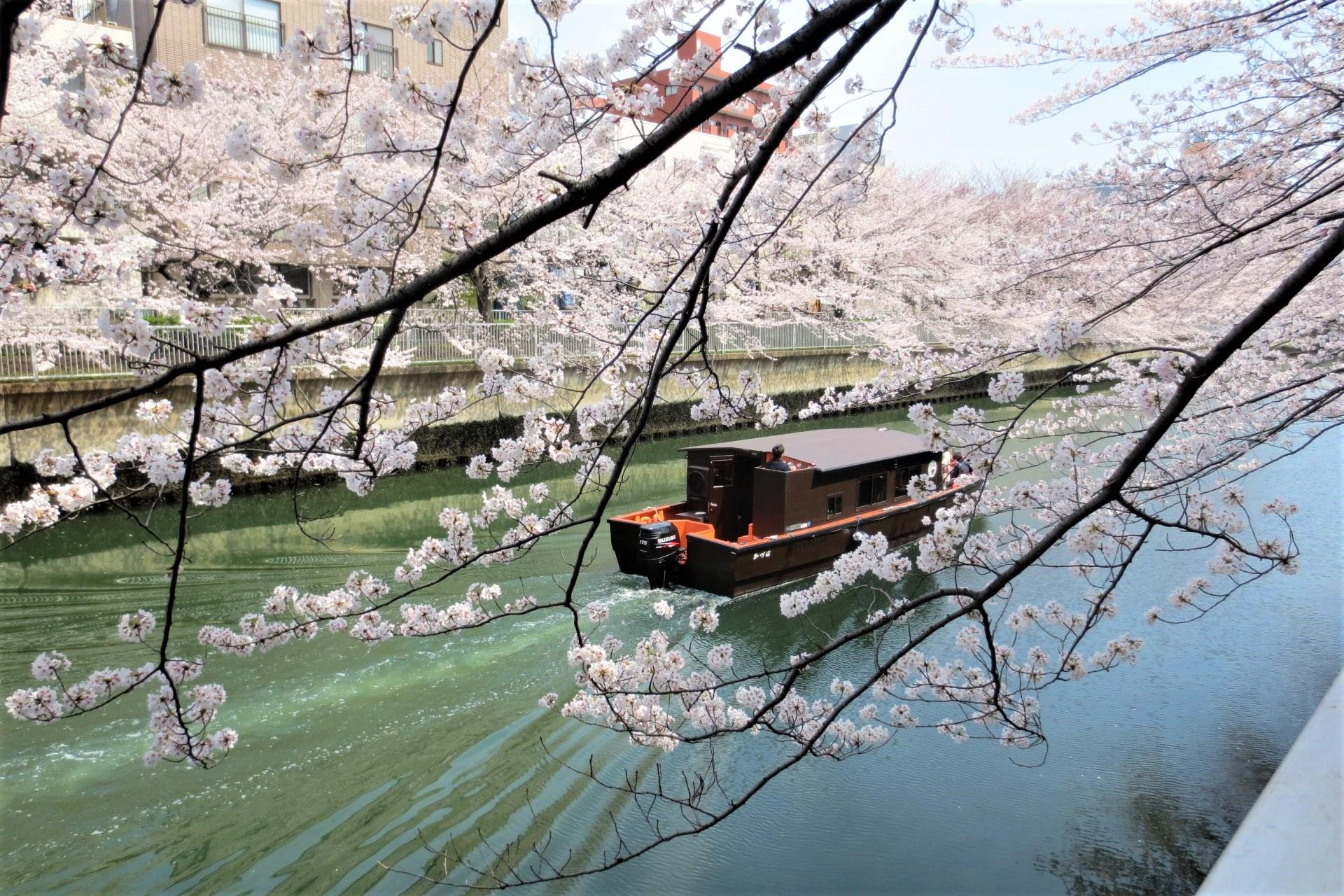 7 Hidden Cherry Blossom Spots in Tokyo2020