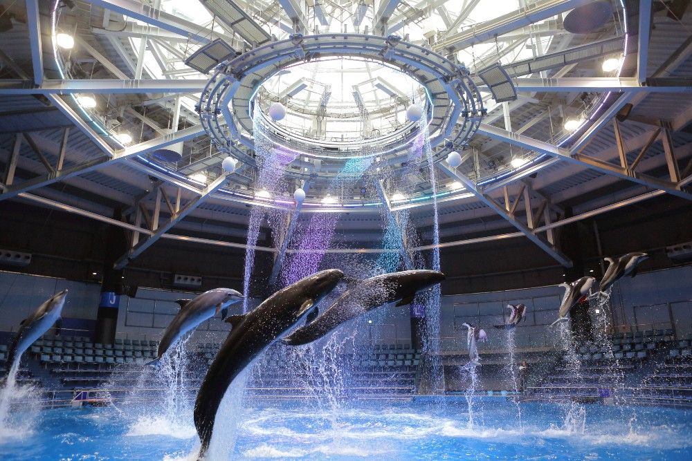 Dolphin performance at Maxell AQUAPARK SHINAGAWA