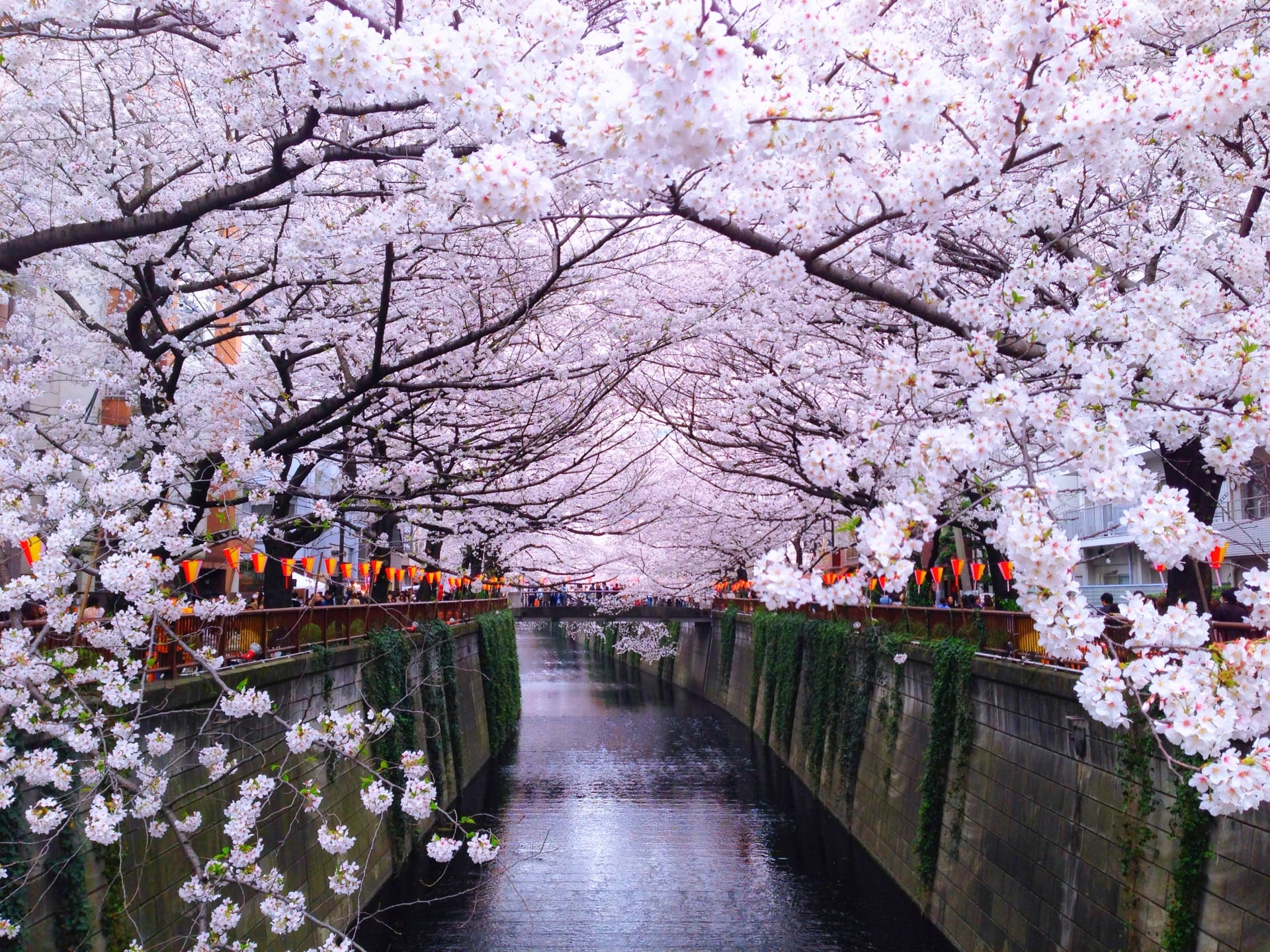 2020 Japan Cherry Blossom Festival Cancellations due to Coronavirus (Covid-19)