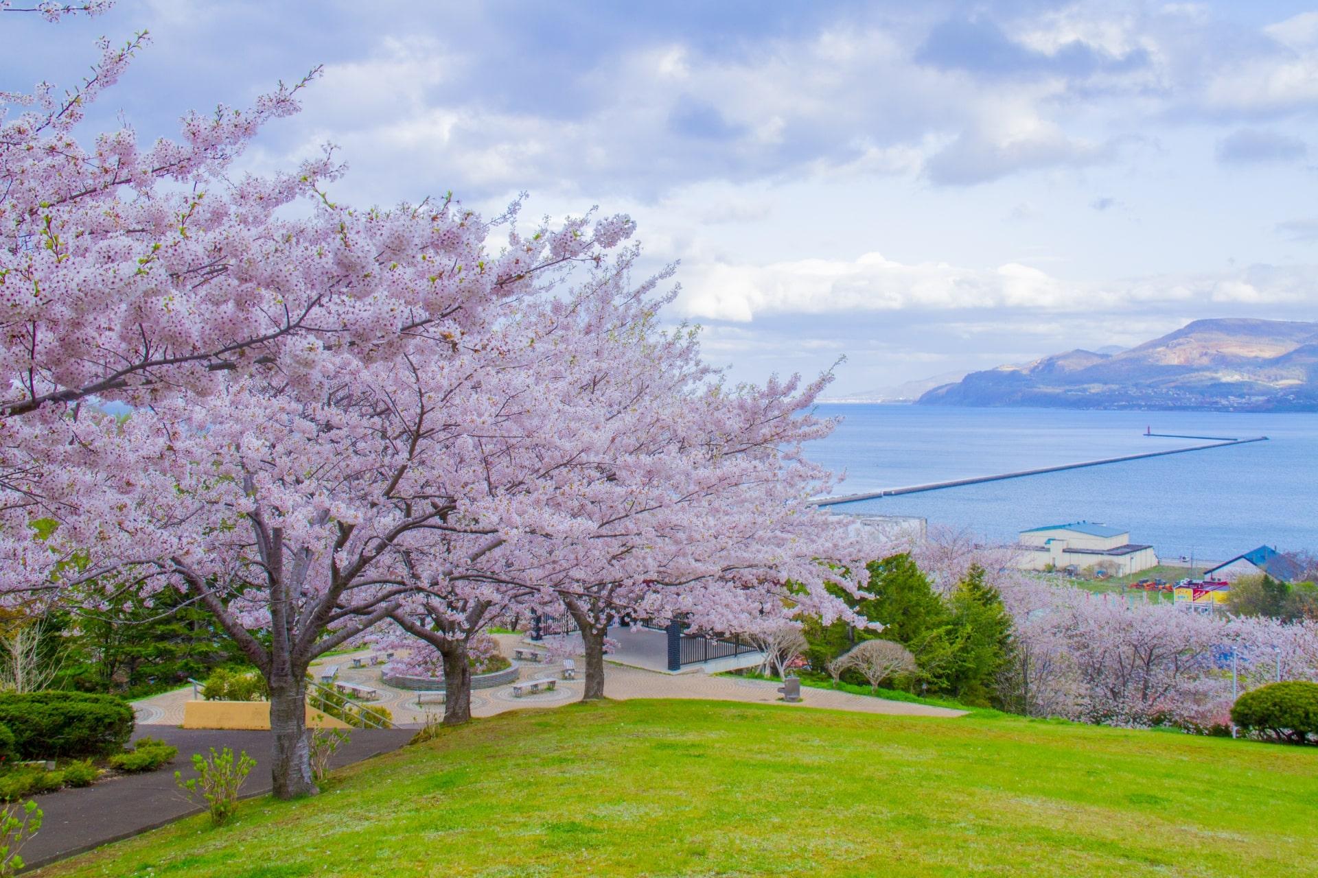Best Cherry Blossom Spots in Hokkaido 2020