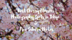 Best Cherry Blossom Photography Spots in Tokyo & Free Sakura Photos
