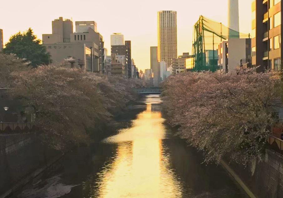 Meguro view