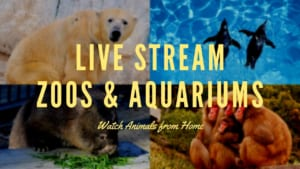 Live Streaming Zoos and Aquariums in Japan