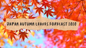 Japan Autumn Leaves Forecast